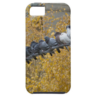 Capa Tough Para iPhone 5 Pombos