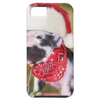 Capa Tough Para iPhone 5 Porco Papai Noel - porco do Natal - leitão