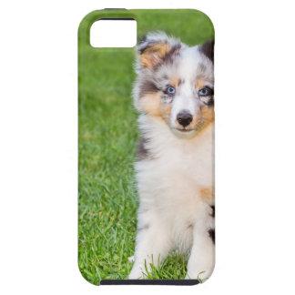 Capa Tough Para iPhone 5 Um cão novo do sheltie que senta-se na grama