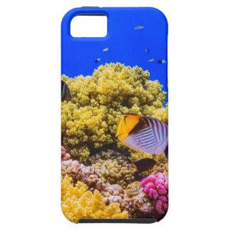 Capa Tough Para iPhone 5 Um recife de corais no Mar Vermelho perto de
