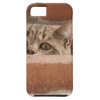 Capa Tough Para iPhone 5 Wildcat novo curioso da atenção dos olhos de gato
