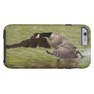 Capa Tough Para iPhone 6 Aterragem do ganso de Canadá na água