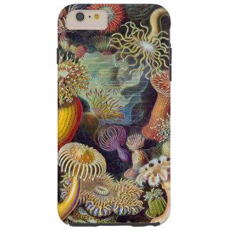 Capa Tough Para iPhone 6 Plus Ilustração de Haeckel das anêmonas de mar