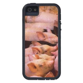 Capa Tough Xtreme Para iPhone 5 Animal - porco - comida do conforto
