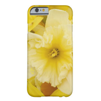 Capas de iphone amarelas brilhantes dos Daffodils
