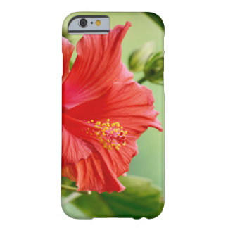 Capas de iphone da flor do hibiscus