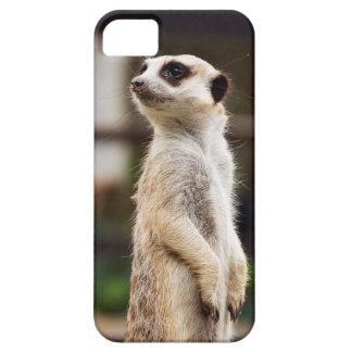 Capas de iphone de Meerkat