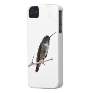 Capas de iphone do colibri