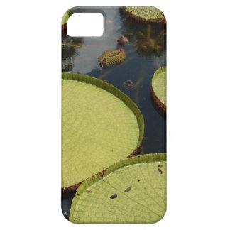 Capas de iphone do lírio de água
