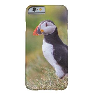 Capas de iphone do papagaio-do-mar