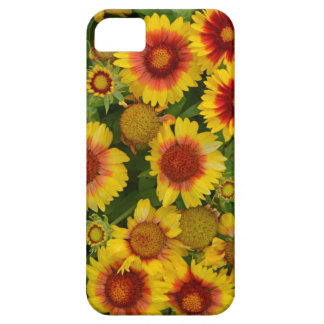 Capas de iphone florais do echinacea alaranjado e capa barely there para iPhone 5