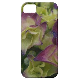 Capas de iphone florais do Hydrangea multicolorido Capas Para iPhone 5