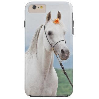Capas iPhone 6 Plus Tough coleção do cavalo. branco árabe