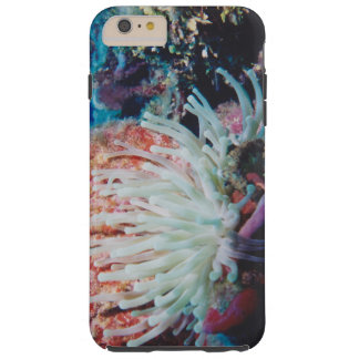 Capas iPhone 6 Plus Tough recife de corais tropical submarino lindo