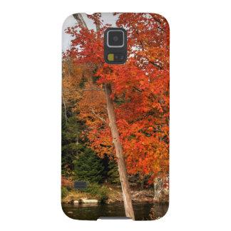Capas Par Galaxy S5 Outono de Adirondack