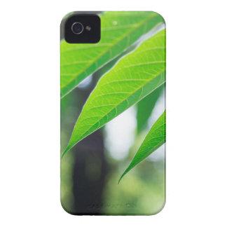 Capas Para iPhone 4 Case-Mate Ailanthus Defocused e borrado do ramo