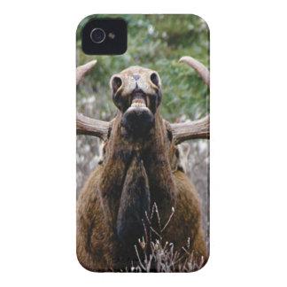 Capas Para iPhone 4 Case-Mate alces estranhos do touro