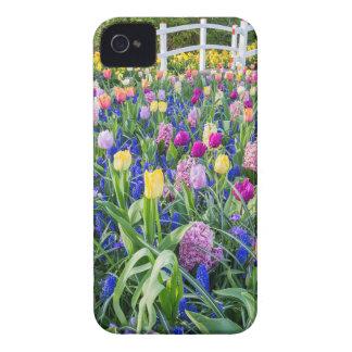 Capas Para iPhone 4 Case-Mate Campo de flores com jacintos e ponte das tulipas
