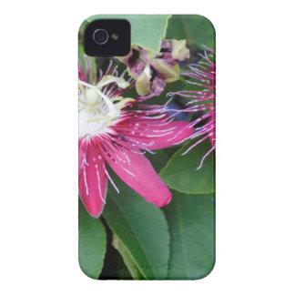Capas Para iPhone 4 Case-Mate Close up vermelho de duas flores da paixão fora na