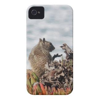 Capas Para iPhone 4 Case-Mate Esquilo pequeno