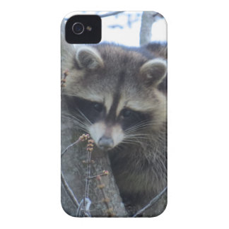 Capas Para iPhone 4 Case-Mate Guaxinim