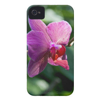 Capas Para iPhone 4 Case-Mate Orquídea mágica