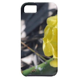 Capas Para iPhone 5 abelha iridescente na flor dos nopales
