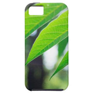 Capas Para iPhone 5 Ailanthus Defocused e borrado do ramo