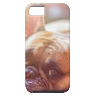 Capas Para iPhone 5 Animal de estimação do buldogue francês