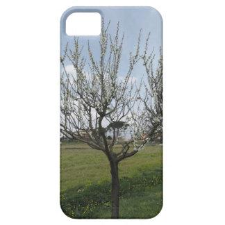 Capas Para iPhone 5 Árvore de pera de florescência no jardim Toscânia,