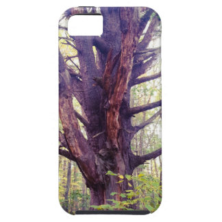 Capas Para iPhone 5 Árvore enevoada