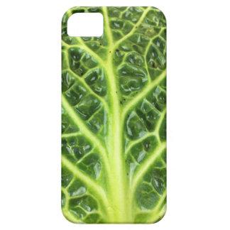 Capas Para iPhone 5 Berza chou couve-de-milão Savoy cabbage vert