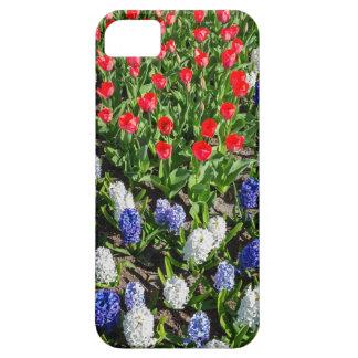 Capas Para iPhone 5 Campo de flores com as tulipas azuis e os jacintos