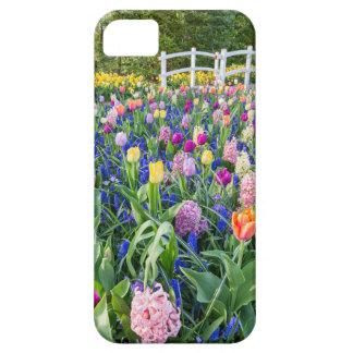 Capas Para iPhone 5 Campo de flores com jacintos e ponte das tulipas
