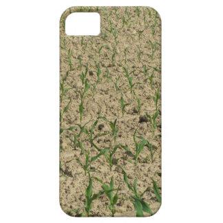 Capas Para iPhone 5 Campo do milho do milho verde na fase inicial