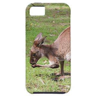 Capas Para iPhone 5 Canguru, interior Austrália