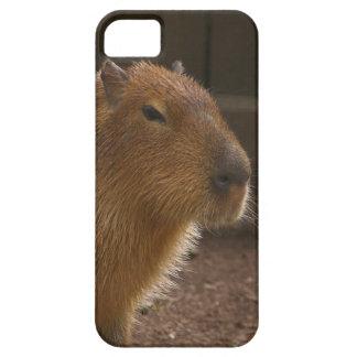 Capas Para iPhone 5 Capybara