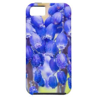 Capas Para iPhone 5 Dois jacintos de uva azuis no primavera