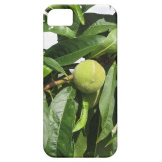 Capas Para iPhone 5 Dois pêssegos verdes unripe que penduram em uma