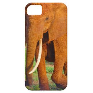 Capas Para iPhone 5 Elefante alaranjado bonito