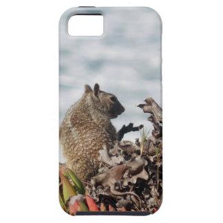Capas Para iPhone 5 Esquilo pequeno