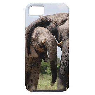 Capas Para iPhone 5 Família do elefante de África