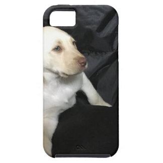 Capas Para iPhone 5 Filhote de cachorro amarelo Sadie do laboratório