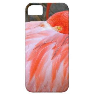 Capas Para iPhone 5 Flamingo cor-de-rosa do sono