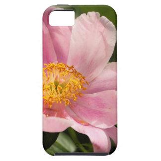 Capas Para iPhone 5 Flor cor-de-rosa da peônia inteiramente aberta