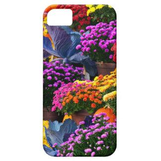 Capas Para iPhone 5 Flores e abóboras
