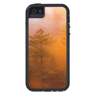 Capas Para iPhone 5 Floresta dourada da corriola