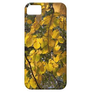 Capas Para iPhone 5 Folhas de outono amarelas e verdes