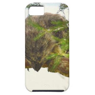 CAPAS PARA iPhone 5 FROGMOUTH TAWNY QUEENSLAND AUSTRÁLIA