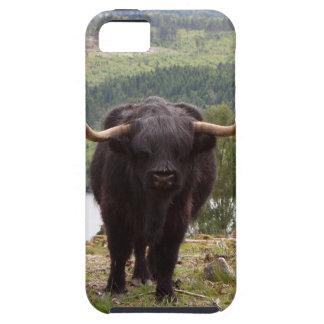 Capas Para iPhone 5 Gado preto das montanhas, Scotland